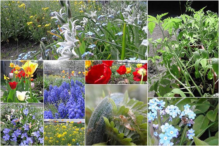 relaks, czas wolny, kwiaty, przy domu, ogródek,