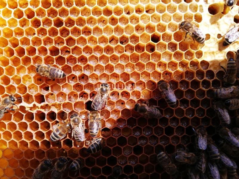 pszczoły, pokarm, ciasto cukrowe, przegląd wiosenny,  inwert,