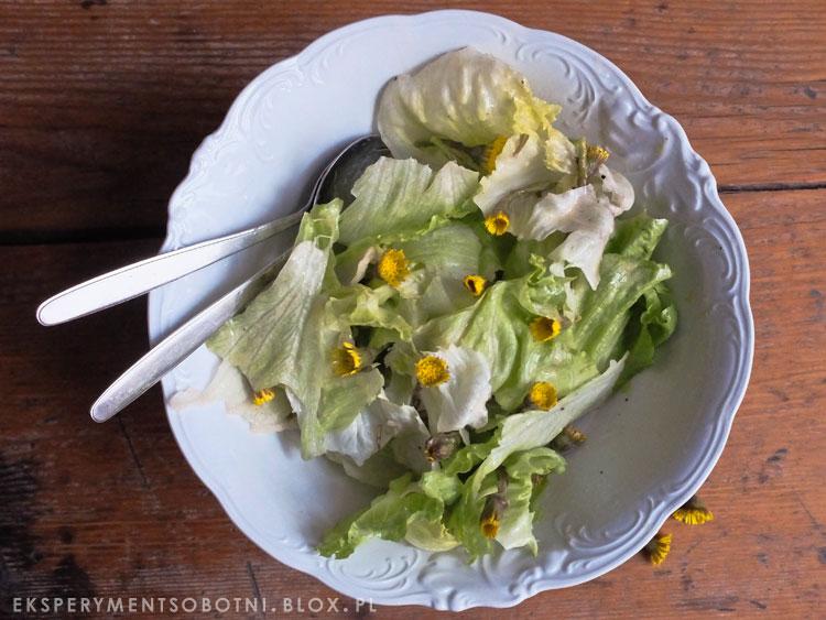 chwasty,rośliny jadalne, dzika kuchnia,