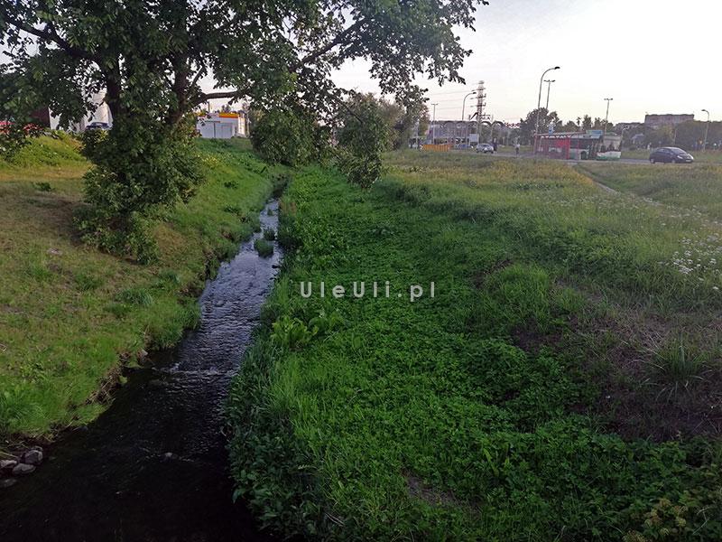 uleuli.pl, łąki kwietne, zieleń w mieście, zapylacze,