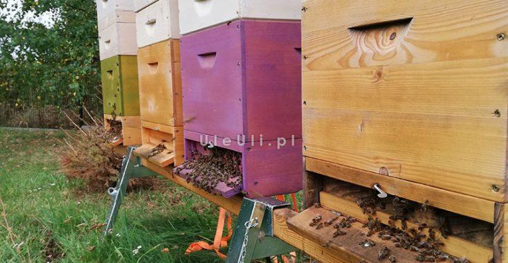 uleuli.pl, pszczoły, wylotek, wentylacja,