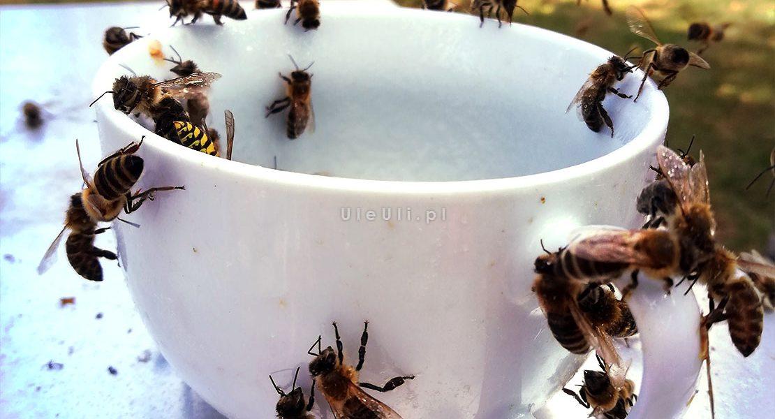 pszczoły, osy, pokarm, cukier,