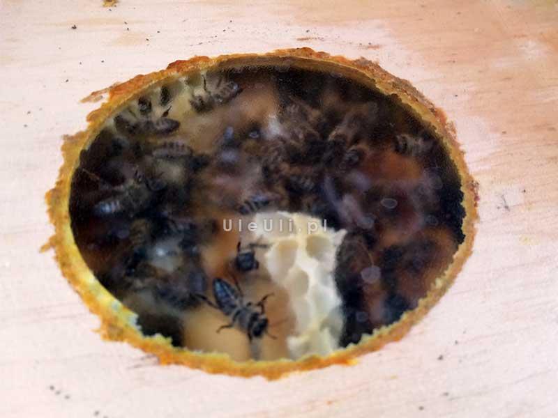 uleuli.pl, pszczoły, pasieka, zima, ul,