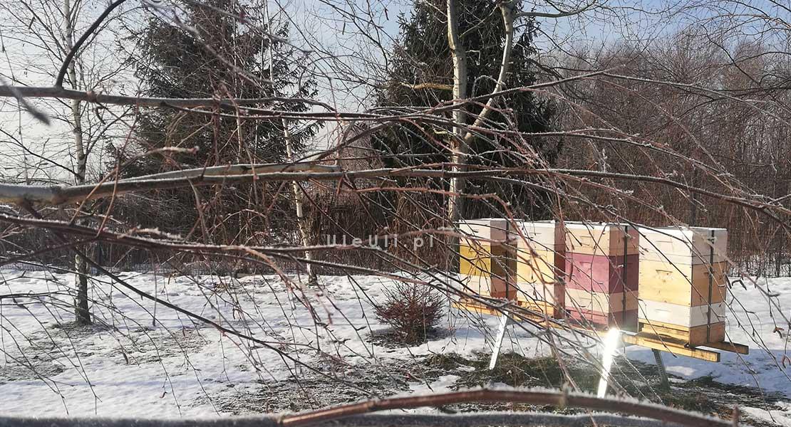 uleuli.pl, pszczoły, zima, zimowla, pasieka