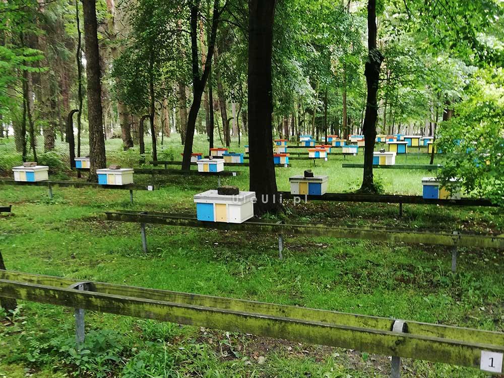 uleuli, trutowisko, murcki, katowice, pszczelarstwo, pasieka,