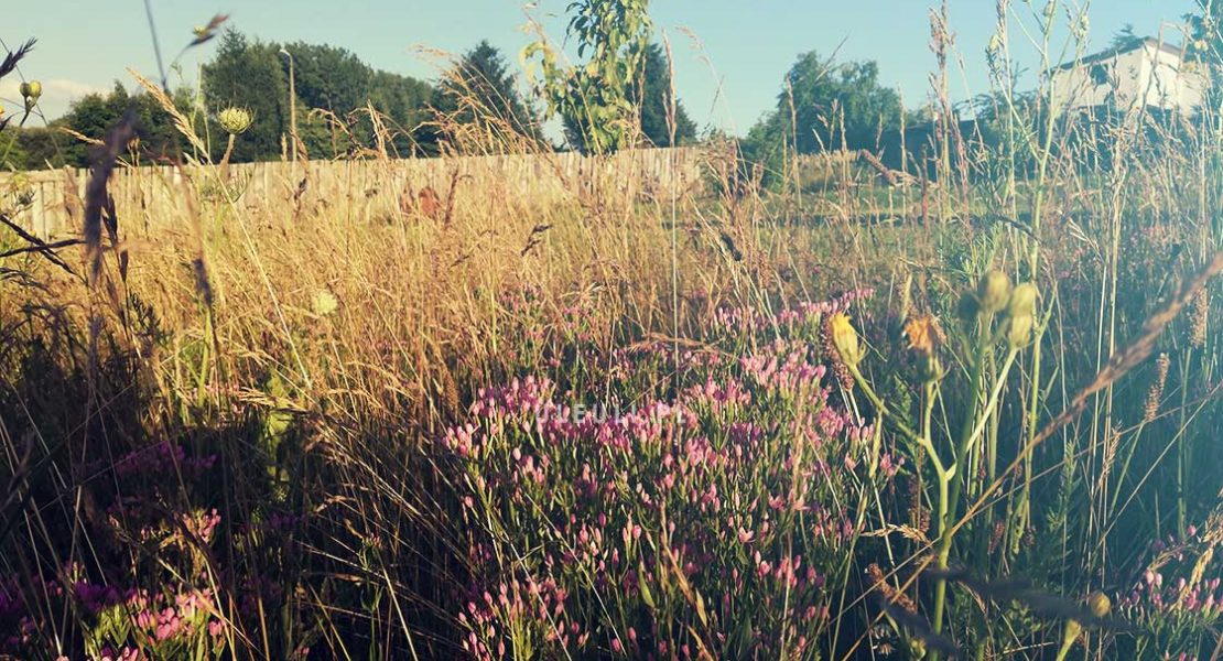 uleuli, łąka, łąka kwietna, zamiast trawnika,
