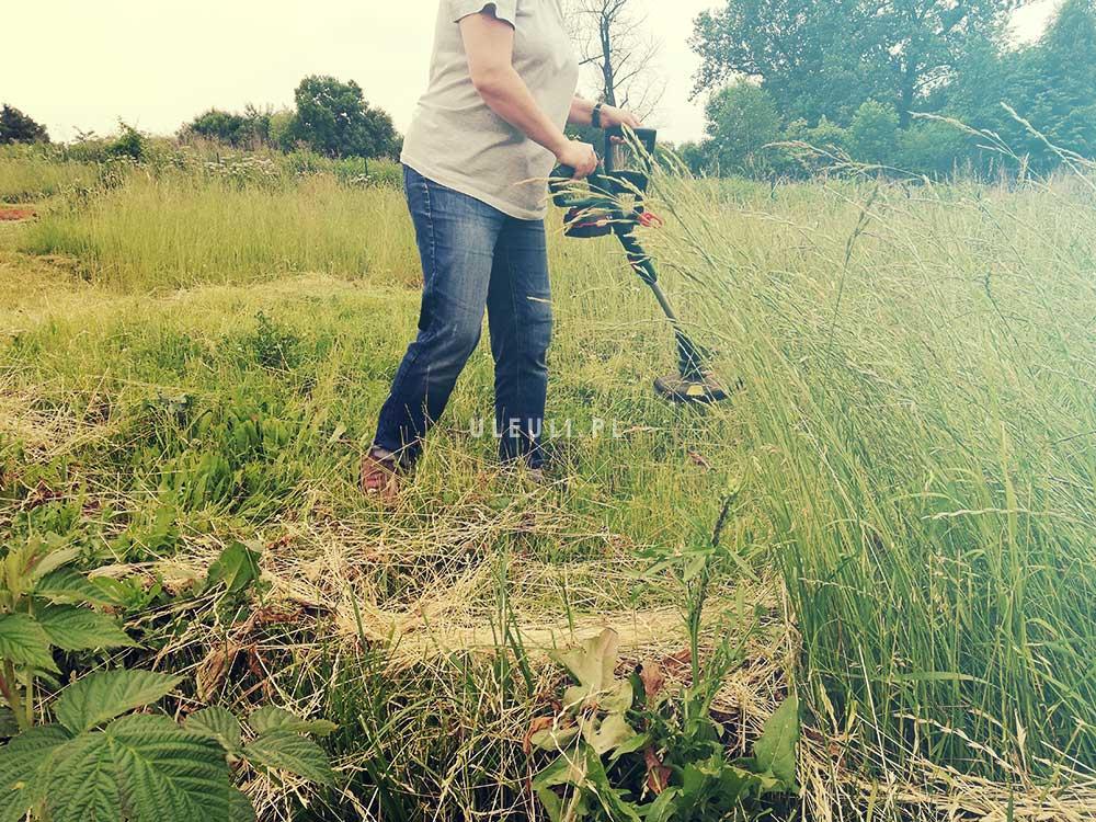 uleuli, koszenie, łąka, łąka kwietna, zamiast trawnika,